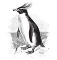 southern rockhopper penguin vintage vector image vector image