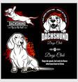dachshund - set for t-shirt logo vector image vector image