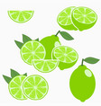 lime citrus fruit vector image vector image