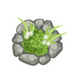 plants and stones landscape element top view vector image vector image