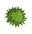 green plant landscape design element top view vector image vector image