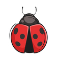 hand drawn of ladybug vector image