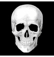 Human skull model object vector image vector image