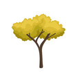 tall autumn tree with bright yellow-green foliage vector image