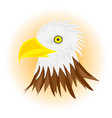 white head eagle vector image