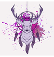 with deer dream catcher and watercolor spla vector image vector image