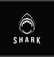 aggressive powerful shark logo icon template vector image
