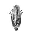 corn glyph icon vector image vector image