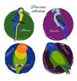 colorful parrot icon set vector image