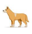 golden dog dingo animal standing on a white vector image vector image