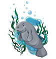 Seacow swimming in the ocean vector image vector image