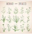 set of herbs and spices vector image
