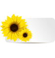 sunflower banner vector image vector image