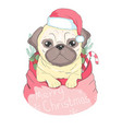 cute puppy in a new year hat and scarf pedigree vector image
