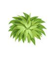 summer green plant landscape natural design vector image vector image