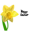 easter yellow narcissus vector image