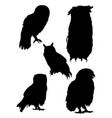 owls birds silhouette vector image vector image