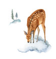 watercolor christmas card with deer and vector image