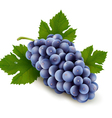 Ripe grapes with leaf vector image