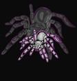 Tarantula with silhouette