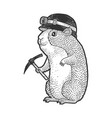 cartoon guinea pig miner sketch vector image