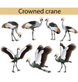 collection crowned cranes in colour image vector image vector image