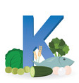 foods rich in vitamin k vector image
