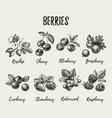 hand drawn sketch berries set eco food vector image