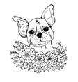 doodle a face a cute bulldog in colors vector image vector image