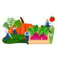 farmers and vegetables harvest time vector image