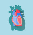 human heart cross section anatomical flat design vector image