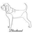 bloodhound dog outline vector image vector image