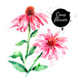 hand drawn watercolor purple coneflower painted vector image vector image