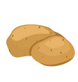 potatoes isolated white vector image vector image