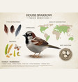 sparrow population infographic composition vector image vector image