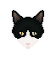 cat head pixel art pet animal vector image