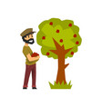 male farmer picking red apples from tree gardener vector image vector image