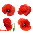 red poppies papaver flowers 3d realistic icon set vector image