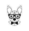 geometric portrait of a french bulldog wearing vector image vector image