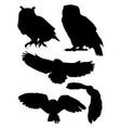 owls birds silhouette vector image vector image