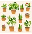Houseplants vector image