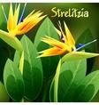Beautiful spring flowers Strelitzia Reginae Cards vector image