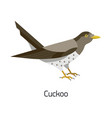 common cuckoo isolated on white background vector image vector image