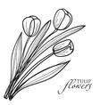 Tulip flowers sketch vector image vector image