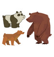 bear animal mammal teddy grizzly funny vector image vector image
