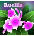 Beautiful spring flowers purple ruellia Cards or vector image vector image