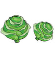 couple heads green cabbage cartoon vector image vector image