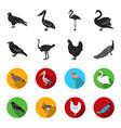 crow ostrich chicken peacock birds set vector image vector image