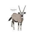 oryx gazella or gemsbok hand draw sketch vector image vector image