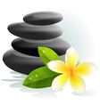 plumeria flower and spa stones vector image vector image